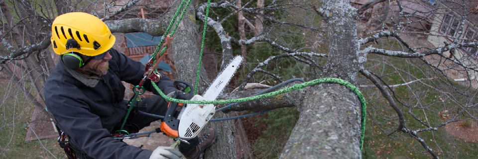 We remove hazardous branches  in inaccessible locations