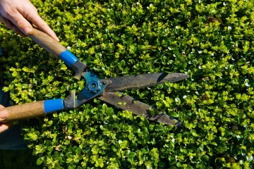 Hedge Trimming & Removal